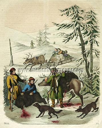 Bear Hunt in Lapland