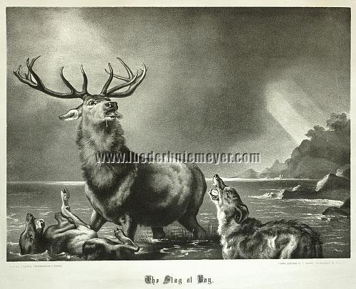 Edwin Landseer, Stag at Bay