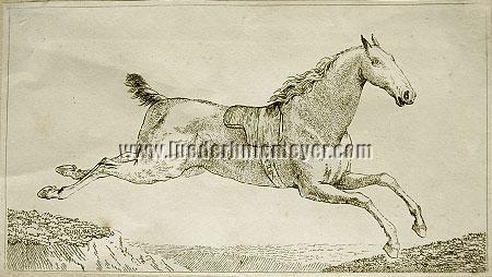 Johann Georg Pforr, Galoping Horse