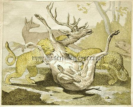 Carl Ruthart, Stag attacked by two Leopards