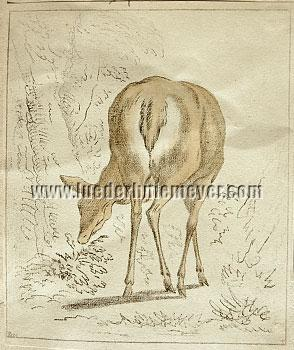 Johann Heinrich Roos, Female Stag (Deer)