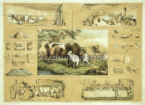Dairy Farming - La Vache