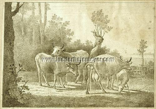 Paulus Potter, Cattle