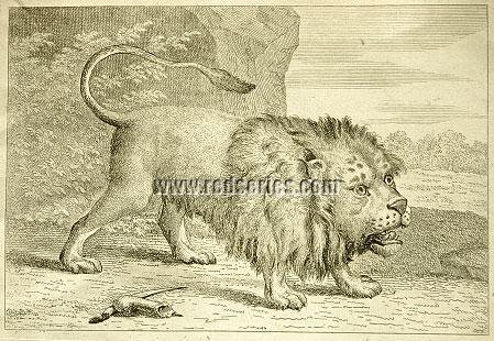 Tischbein, Löwe