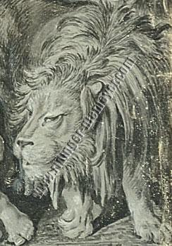 Johann Elias Ridinger, Lion