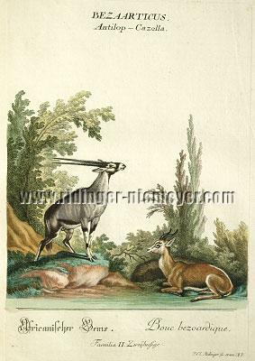 Johann Elias Ridinger, Antelopes