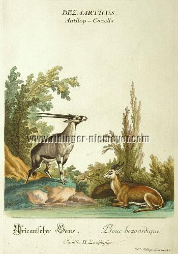 Ridinger, Springbok + Oryx-Antilope