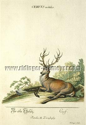 Johann Elias Ridinger, The noble Stag