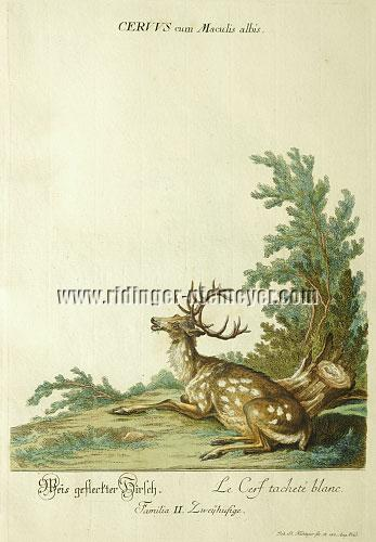 Johann Elias Ridinger, White Spotted Stag