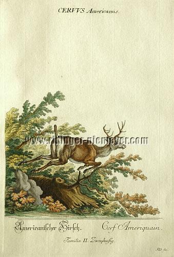 Ridinger, Amerikanischer Hirsch