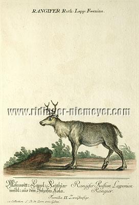 Johann Elias Ridinger, Moscowitt: Lapp: Reindeer female from the Harbor of Kola
