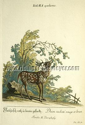 Johann Elias Ridinger, Fallow-deer spotted red and brown
