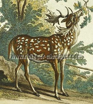 Johann Elias Ridinger, Fallow Deer Speckled Red and Brown (detail)