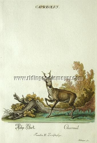 Ridinger, Roe Buck