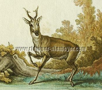 Ridinger, Roe Buck (detail)