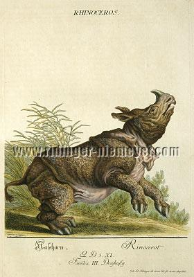 Johann Elias Ridinger, Rhinoceros