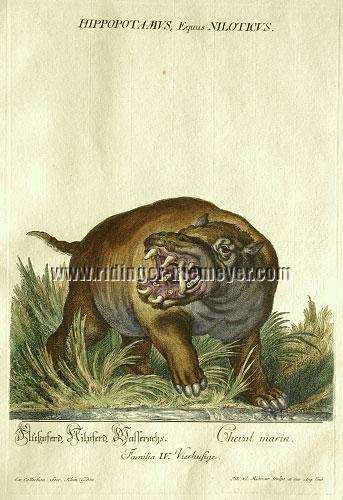 Johann Elias Ridinger, Hippopotamus, River Horse, Water Ox
