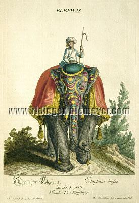 Johann Elias Ridinger, Colored Animal Kingdom
