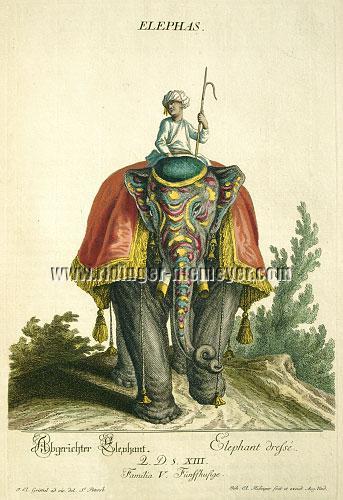 Johann Elias Ridinger, Koloriertes Thierreich