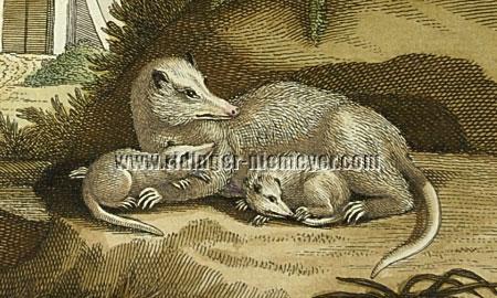 Martin Elias Ridinger, Opossum