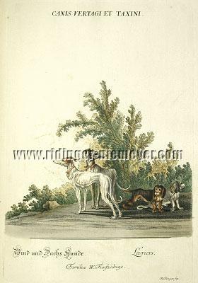 Johann Elias Ridinger, Greyhound and Dachs Hunde