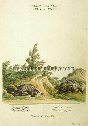 Johann Elias Ridinger, Badgers