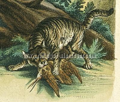 Johann Elias Ridinger, Wildcat or Male Cat