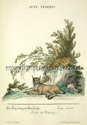 Johann Elias Ridinger, Lynx
