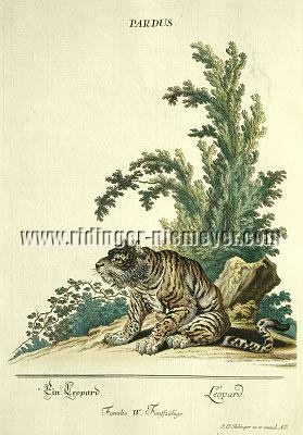Johann Elias Ridinger, A Leopard