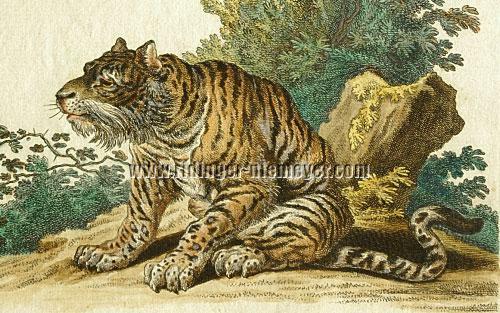Johann Elias Ridinger, Bengal Tiger (detail)