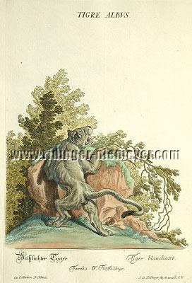 Johann Elias Ridinger, Whitish Tiger