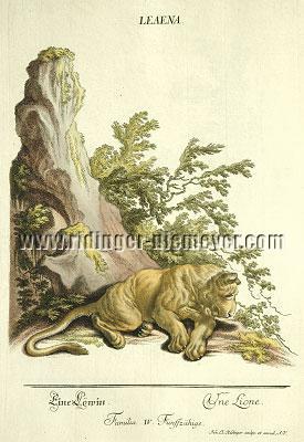 Johann Elias Ridinger, A Lioness