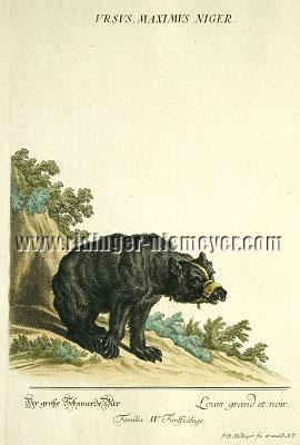Ridinger, Black Bear