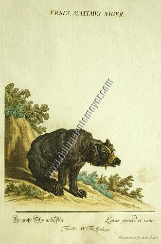 Johann Elias Ridinger, Black Bear