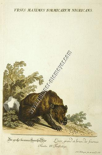 Johann Elias Ridinger, Brown Bear