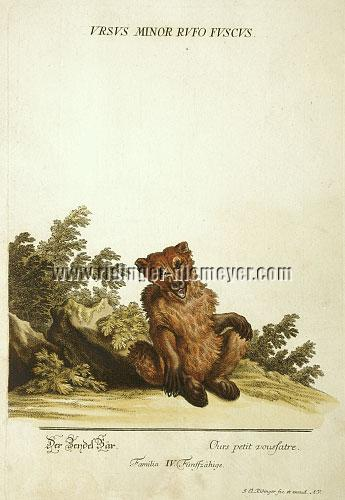 Johann Elias Ridinger, The Brown Bear