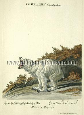 Johann Elias Ridinger, The White Bear