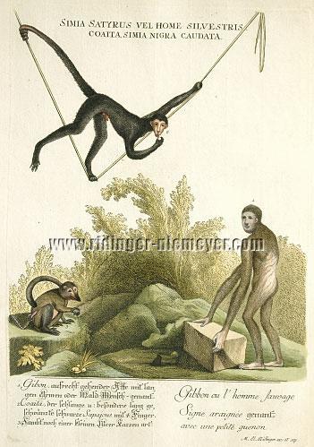 Ridinger, Apes/Gibbons