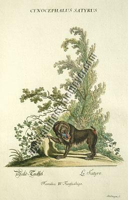 Johann Elias Ridinger, Wald=Teuffel (Mandrill)