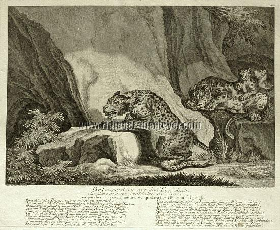 Johann Elias Ridinger, The Leopard is equal to the Tiger