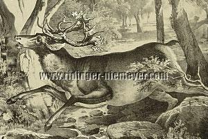Johann Elias Ridinger, Edel=Hirsch von 58 Enden (Menzler/Detail)