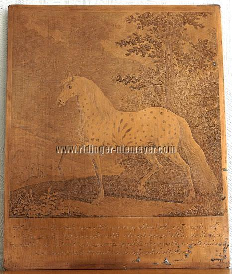 Ridinger, Leopard Horse with Ear-bouquet