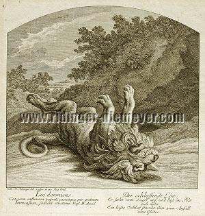 Ridinger, The Sleeping Lion