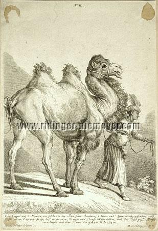 Johann Elias Ridinger, Camels III