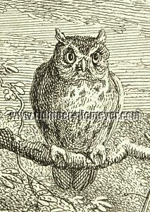 Ridinger, Eagle Owl (detail)