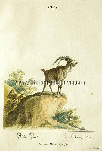 Johann Elias Ridinger, Ibex