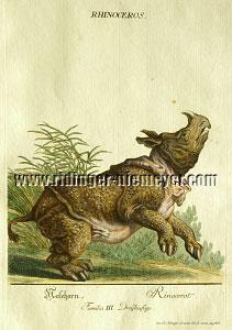 Johann Elias Ridinger, Springendes Nashorn
