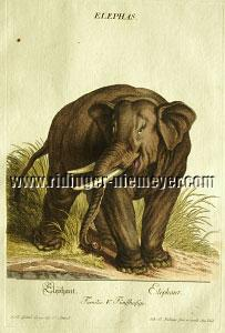 Ridinger, Elephant