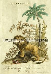 Johann Elias Ridinger, Löwe über Wildschwein