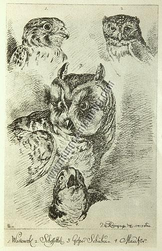Ridinger, Various Owls